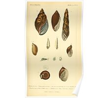 The Animal Kingdom by Georges Cuvier, PA Latreille, and Henry McMurtrie 1834  226 - Mollusca Mollusks Poster