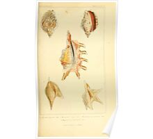 The Animal Kingdom by Georges Cuvier, PA Latreille, and Henry McMurtrie 1834  254 - Mollusca Mollusks Poster