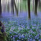 Bluebell morning by outwest photography.co.uk