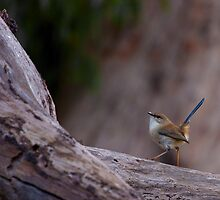 Australian Birds by David Sumner