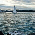 Auckland, NZ Harbour by Donna Rondeau