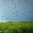 Summer Rain  by Kate Towers IPA