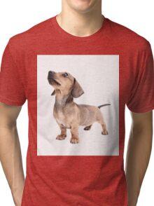 Dachshund Standing Tall Tri-blend T-Shirt