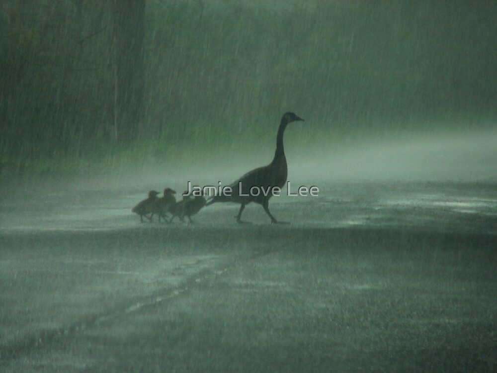 April Showers by Jamie Lee
