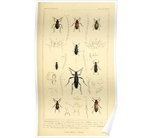 The Animal Kingdom by Georges Cuvier, PA Latreille, and Henry McMurtrie 1834  455 - Insecta Insects Poster
