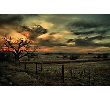 Sunset At The Old Tree Photographic Print
