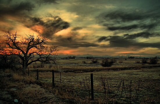 Sunset At The Old Tree by John  De Bord Photography