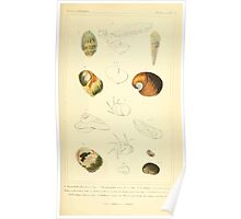 The Animal Kingdom by Georges Cuvier, PA Latreille, and Henry McMurtrie 1834  237 - Mollusca Mollusks Poster