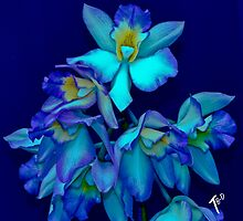 BLUE ORCHID SCARF by Thomas Barker-Detwiler