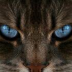 Clear Blue Eyes Cat by terrebo