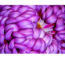 Curly Curls Photographic Print