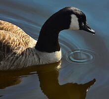 Calm Reflection - photograph by Paul Davenport