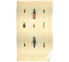 The Animal Kingdom by Georges Cuvier, PA Latreille, and Henry McMurtrie 1834  458 - Insecta Insects Poster