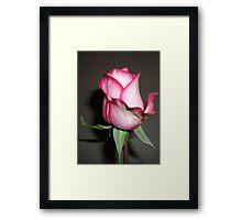 Gifted Rose #2 Framed Print