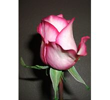 Gifted Rose #2 Photographic Print