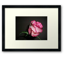 Gifted Rose Framed Print