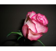 Gifted Rose Photographic Print