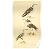 The Animal Kingdom by Georges Cuvier, PA Latreille, and Henry McMurtrie 1834 733 - Aves Avians Birds Poster