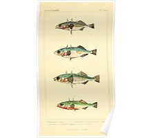 The Animal Kingdom by Georges Cuvier, PA Latreille, and Henry McMurtrie 1834  096 - Pisces Fish Poster