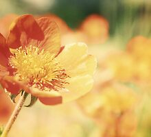 Orange flower by MelanieD