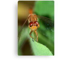 Dragonfly Eyes Canvas Print