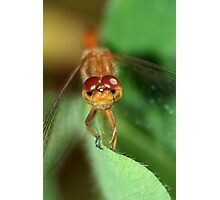Dragonfly Eyes Photographic Print