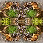 Stump Garden Symmetry by Deborah Dillehay