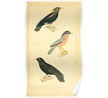 The Animal Kingdom by Georges Cuvier, PA Latreille, and Henry McMurtrie 1834 672 - Aves Avians Birds Poster