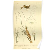 The Animal Kingdom by Georges Cuvier, PA Latreille, and Henry McMurtrie 1834  340 - Crustacea Crustaeans Poster