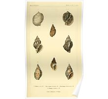 The Animal Kingdom by Georges Cuvier, PA Latreille, and Henry McMurtrie 1834  243 - Mollusca Mollusks Poster