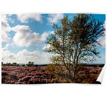 Tree on the Moors Poster