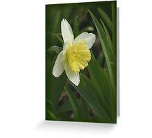 Beautiful Daffodil Greeting Card