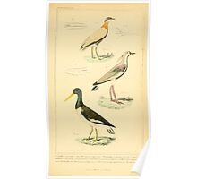 The Animal Kingdom by Georges Cuvier, PA Latreille, and Henry McMurtrie 1834 726 - Aves Avians Birds Poster