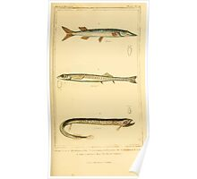 The Animal Kingdom by Georges Cuvier, PA Latreille, and Henry McMurtrie 1834  170 - Pisces Fish Poster