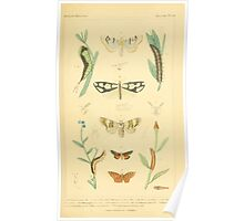 The Animal Kingdom by Georges Cuvier, PA Latreille, and Henry McMurtrie 1834  515 - Insecta Insects Poster