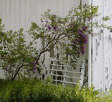 Forgotten Lilacs by Sandra Guzman