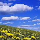 A Dandy Field by Brian Carey