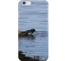 Boat-tailed Grackle (Quiscalus major) iPhone Case/Skin