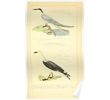 The Animal Kingdom by Georges Cuvier, PA Latreille, and Henry McMurtrie 1834 744 - Aves Avians Birds Poster