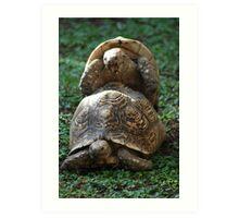 shell sex Art Print