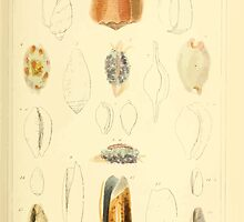 The Animal Kingdom by Georges Cuvier, PA Latreille, and Henry McMurtrie 1834  244 - Mollusca Mollusks by wetdryvac