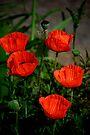 Poppy time! by LudaNayvelt