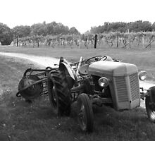 """""""Tractor of the Vineyard"""" by Sherry Graddy"""