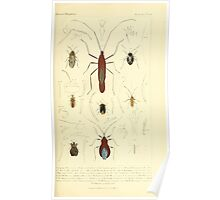 The Animal Kingdom by Georges Cuvier, PA Latreille, and Henry McMurtrie 1834  481 - Insecta Insects Poster