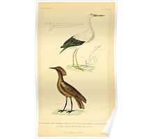 The Animal Kingdom by Georges Cuvier, PA Latreille, and Henry McMurtrie 1834 729 - Aves Avians Birds Poster