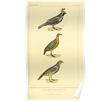 The Animal Kingdom by Georges Cuvier, PA Latreille, and Henry McMurtrie 1834 709 - Aves Avians Birds Poster