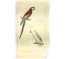 The Animal Kingdom by Georges Cuvier, PA Latreille, and Henry McMurtrie 1834 707 - Aves Avians Birds Poster