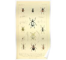 The Animal Kingdom by Georges Cuvier, PA Latreille, and Henry McMurtrie 1834  460 - Insecta Insects Poster