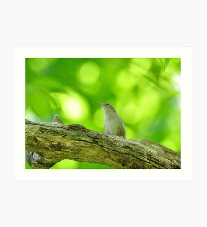 Small songbird Art Print