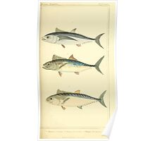The Animal Kingdom by Georges Cuvier, PA Latreille, and Henry McMurtrie 1834  141 - Pisces Fish Poster